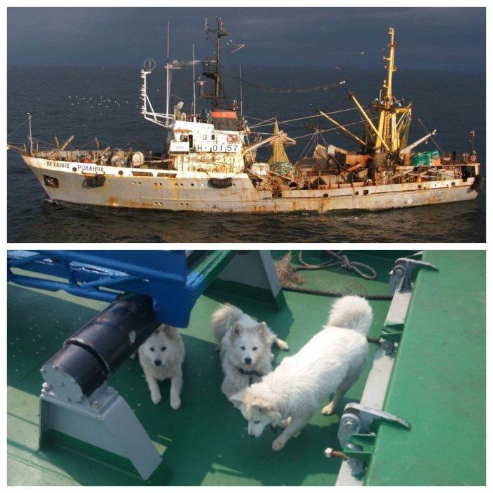 Российских моряков, отказавшихся усыплять щенков, не пускали в порт