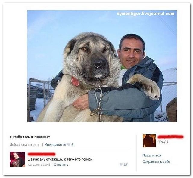Новая партия искрометных комментариев из соцсетей