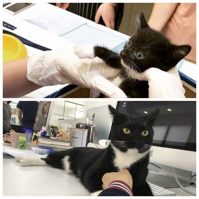 Девушка выходила сбитого машиной котенка, и тот превратился в настоящего красавца