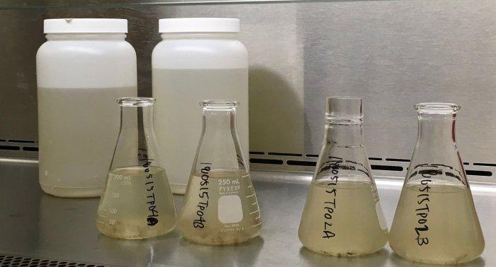 Все анализы в канализации: как ученые США помогают медикам в лечении наркоманов