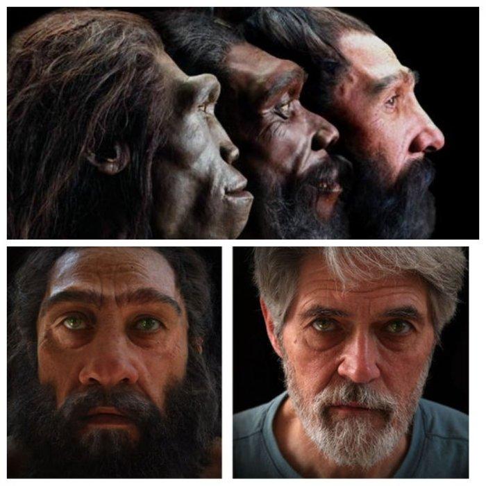 Как изменялось человеческое лицо за последние 6 миллионов лет: видео