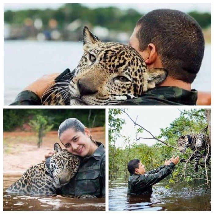 Бразильские солдаты спасли тонущего ягуара