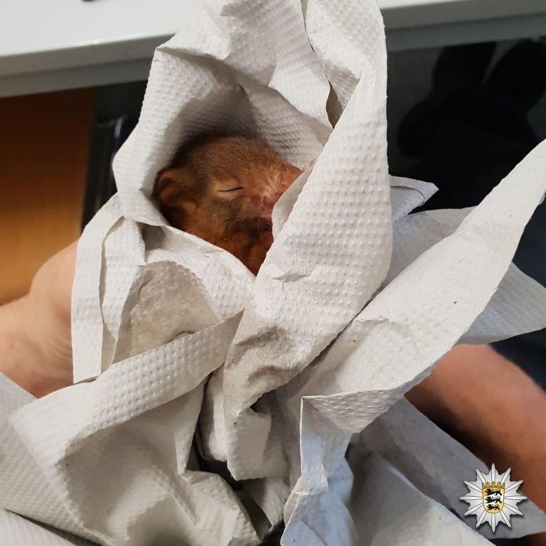 В Германии мужчину пришлось спасать от белки-преследователя при помощи полиции